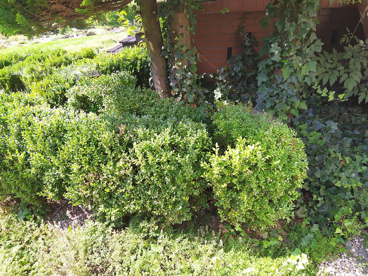 stylizacja ogrodu