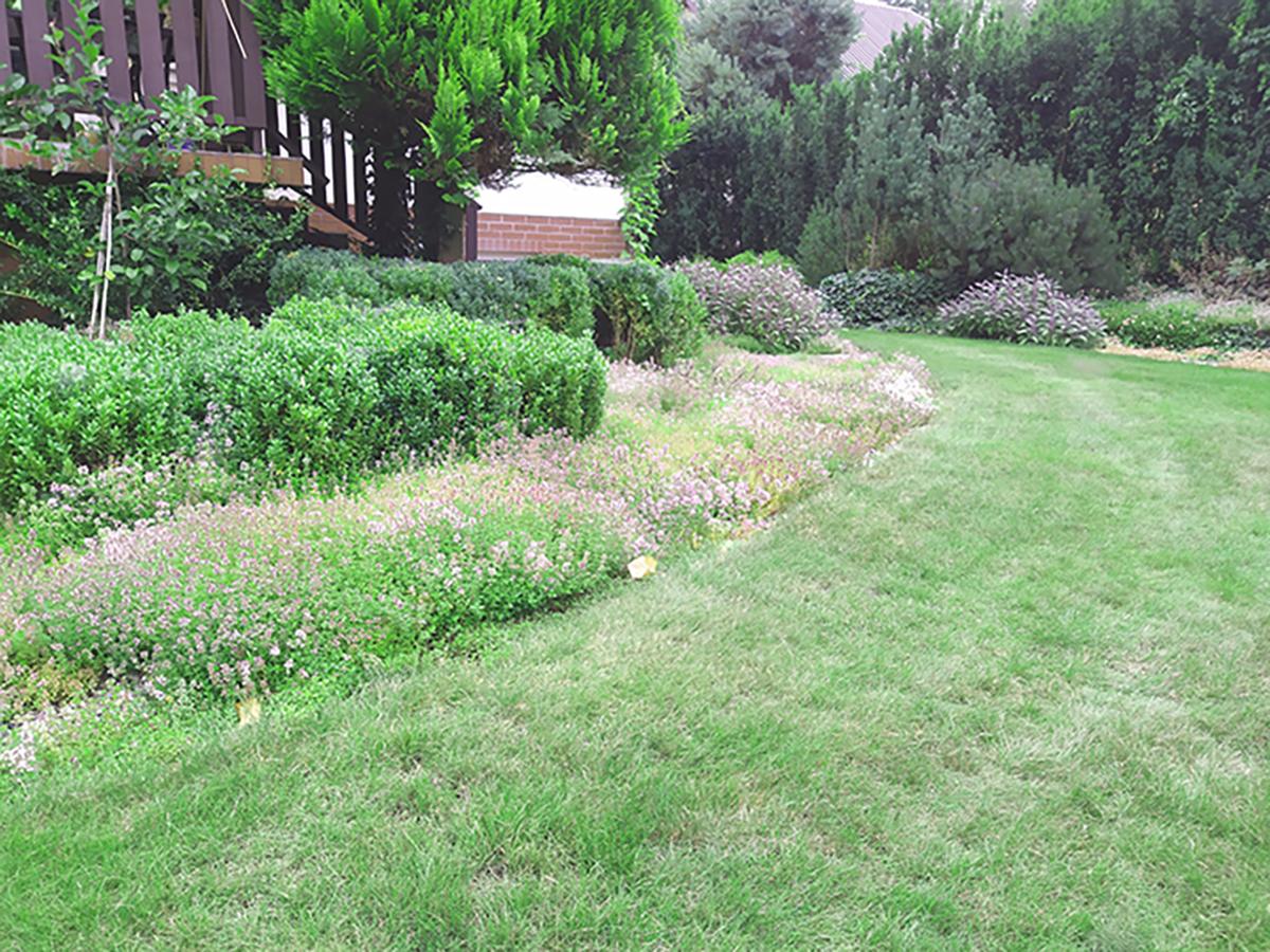 Projekty trawników